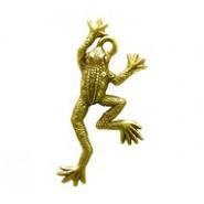 Frog #3647